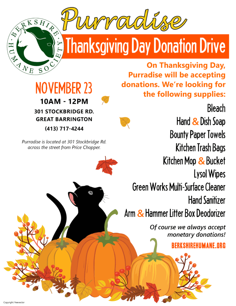 Thanksgiving Day Purradise Donation Drive @ Purradise | Great Barrington | Massachusetts | United States