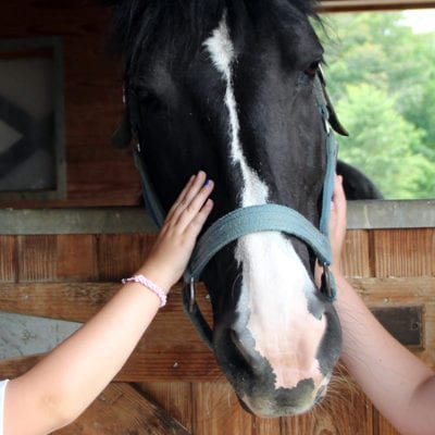 Camp Humane campers visit Equine Advocates