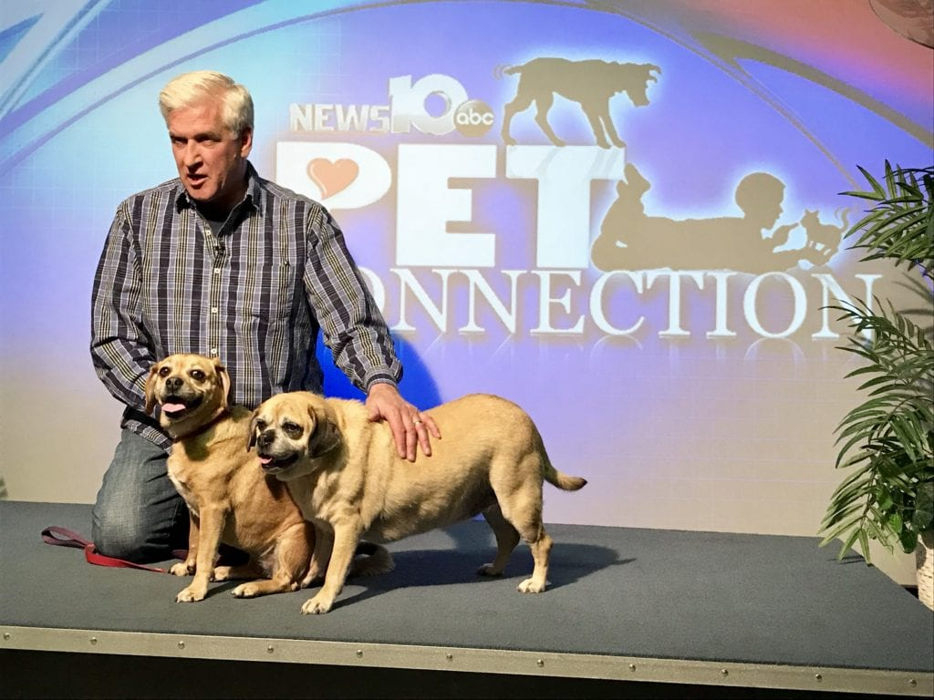 Steve Caporizzo Broadcasts Live from BHS @ Berkshire Humane Society | Pittsfield | Massachusetts | United States