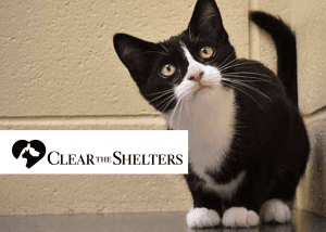 Clear the Shelters: August 18 @ Berkshire Humane Society | Pittsfield | Massachusetts | United States