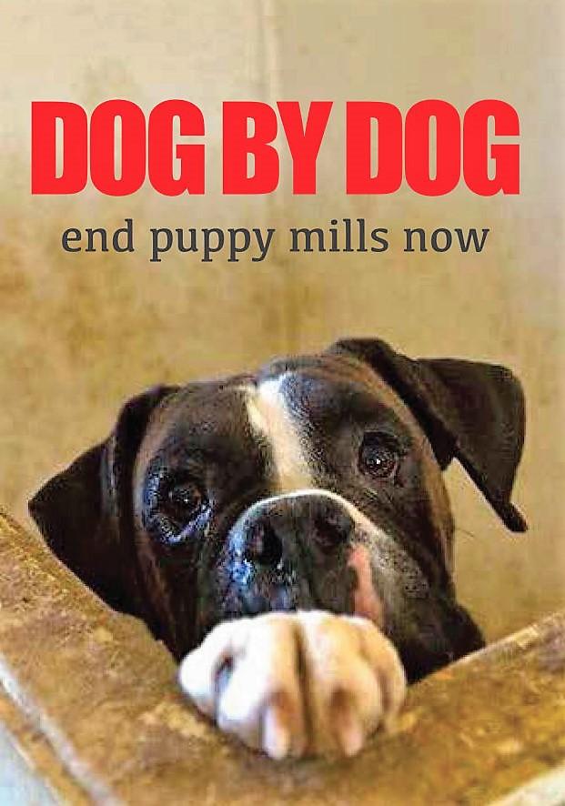 Dog by Dog documentary
