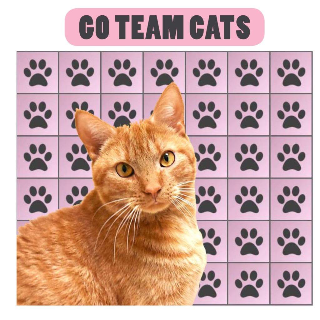 Team Cats