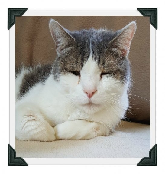 Petey, a senior kitty