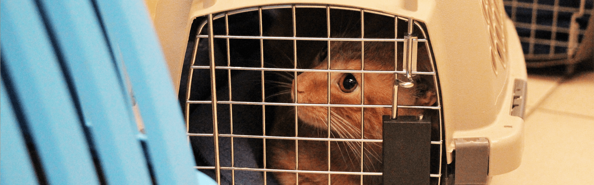 cat in carrier looking out