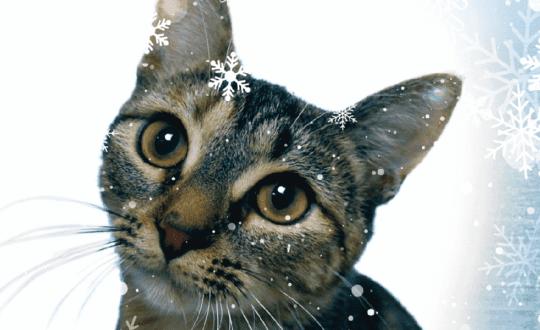Wish List Cat